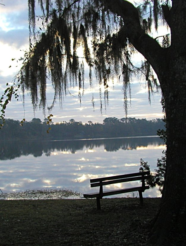 lonely-morning-bench